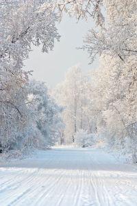 ea316e4da25265d90505ecb59fcbcf0d--snow-white-winter-white