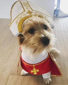 pope dog